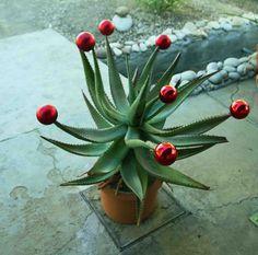 Great idea for a Christmas Tree - use an #aloe