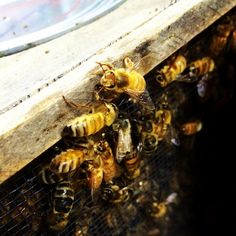 5 Ways to Really Give Bees a Chance. ~ Marcee Murray King