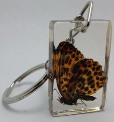 Keychain-with-Real-Butterfly-or-Moth-in-Resin