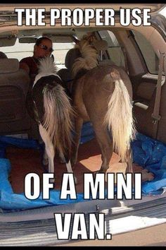 Its called a mini van, so why can't you use it for mini horses.