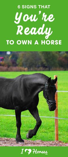 Are you wondering whether youre really ready to own a horse? Making the decision to buy a horse is a big step but these signs can help you identify if youre ready to have a horse of your own. Dressage, Buy A Horse, Horse Feed, Horse Story, Equestrian Outfits, Equestrian Fashion, Equestrian Style, Horse Fashion, Riding Lessons