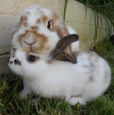 bunnies and bunnies!!