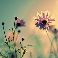 sun shine..