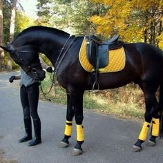 There's something about yellow on a black horse, just love it!
