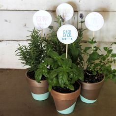gold and mint dipped herb pots