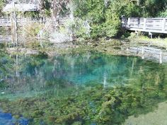 Magnolia Springs State Park, Millen, Georgia.  Just a hop, skip, and a jump down the road!  Tons of Civil War history, then known as Camp Lawton.  It served as a prison camp for 10,000 prisoners.    The beautiful crystal clear natural springs flow around nine million gallons of water per day!    A great place to hike, fish, swim, and enjoy the fresh Georgia air.
