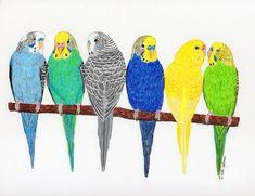 http://images.fineartamerica.com/images-medium-large-5/six-parakeets-rita-palmer.jpg