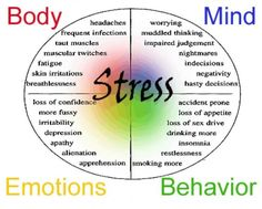 The Stress Response – Fight/Flight/Freeze/Feed and Fornicate