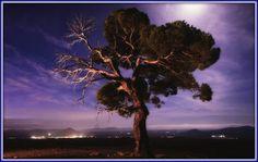 Γη και Ελευθερία.: Aυτά τα δέντρα δε βολεύονται με λιγότερο ουρανό...... Poetry, Celestial, Sunset, Outdoor, Outdoors, Sunsets, Poetry Books, Outdoor Games, Poem