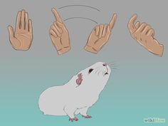 Train Your Guinea Pig Step 2.jpg