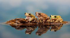 frog boat.. by Mark Bridger on 500px