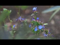 ▶ Work-in-Progress » Urban Oasis: The Redesigned Monk's Garden - YouTube