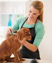 Grooming facilities are getting more and more carriers to shop and compare to, more options, means cheaper premium!!!!   Mitchell Weiss Commercial Account Executive 805.766.3124 cell