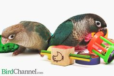 Once your pet bird learns how to play, toys are not the limit.