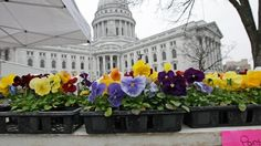 Dane County Farmers Market in Madison, Wisconsin - Kid-friendly Attractions Monona Terrace, Madison Wisconsin, Spring Is Here, Places To Eat, Farmers Market, Outdoor Activities, The Good Place, Marketing, Brunches