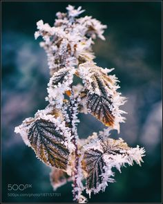 heute Morgen by ernstkramer #nature #mothernature #travel #traveling #vacation #visiting #trip #holiday #tourism #tourist #photooftheday #amazing #picoftheday