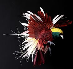 DIANA BELTRAN HERRERA : From Bogota, Columbia and currently living in Bristol, England makes startlingly realistic life size sculptures of birds (more than 100 species so far), from sheets of paper. Shown here, a Greater Bird of Paradise.