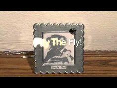 Bugasalt.com -  Pity the Fly!