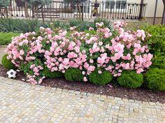 Ogród z różami Kielce