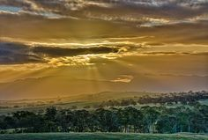 Australian bush sunset