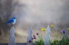 """O Pássaro Azul"", de Charles Bukowski"