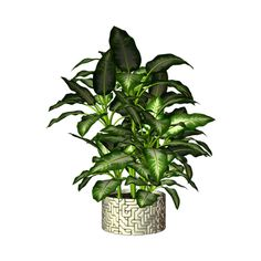 Комнатные растения ❤ liked on Polyvore featuring plants, decor, plantas, flowers and foliage