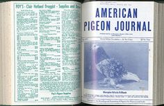 American Pigeon Journal, Warrenton, Missouri, January-December 1979 (12 issues hardbound)