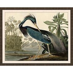 With stunning detail, the majestic Blue Heron Framed Wall Art creates a dramatic coastal look to any room decor. Printed on paper in vibrant colors, this elegant print is displayed in a dark walnut frame and comes ready to hang. Audubon Birds, Birds Of America, John James Audubon, Vintage Art Prints, Blue Heron, Bird Prints, Stretched Canvas Prints, Decoration, Framed Wall Art