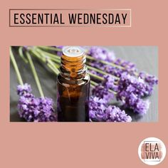 """Present Holistic Life Coach on Instagram: """"Essential Wednesday everyone!  Yes! Essential;-) Every Wednesday here at ElaViva the best tips about Aromatherapy and Aromathology.…"""" Aromatherapy, Wednesday, Essential Oils, Essentials, Presents, Good Things, Tips, Instagram, Gifts"""