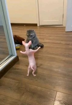 Funny Animals With Captions, Cute Funny Animals, Cute Baby Animals, Cute Cats, Funny Cats, Cute Animal Photos, Cute Animal Videos, Funny Animal Pictures, Funny Animal Vines