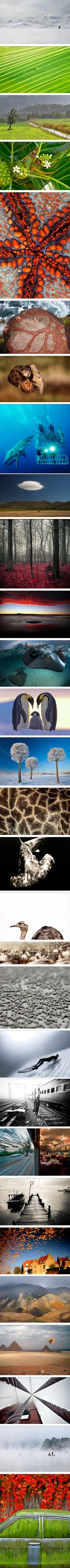 Best nature pictures of 2012 NationalGeographic.com