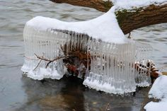 caged in by ice