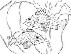 Finding The True Stars Of Ocean Marine Life Coloring Book For Future Biologists
