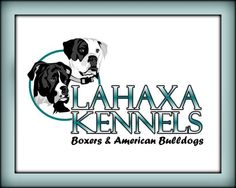 DeAnn Thompson knows her way around Boxers and Bullies... beautiful dogs.