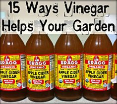 Get Rid of Deer, Rabbits, Racoons, and Cats: These animals hate the smell of vinegar and it will keep them out of your garden naturally and safely. It is best to...