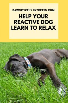 Dog Care Tips, Pet Care, Pet Tips, Relaxed Dog, Reactive Dog, Learning To Relax, Puppies Tips, Best Dog Training, Dog Pin