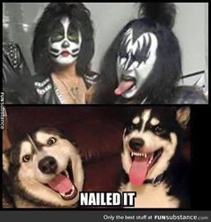 Siberian Husky Kiss Army Unit More - More memes, funny videos and pics on Husky Humor, Funny Animal Pictures, Funny Animals, Cute Animals, Hilarious Pictures, Funny Videos, Funny Images, Funny Photos, I Love Dogs