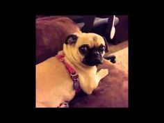 Funniest ANIMAL Vine Videos of 2013! Cute Funny Vine Compilation] - YouTube