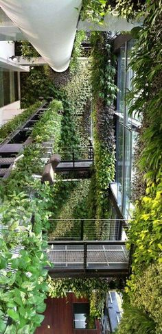 Use automated aquaponic systems to maintain this