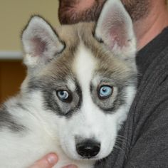 Tahoe was adopted on 6/9/15!