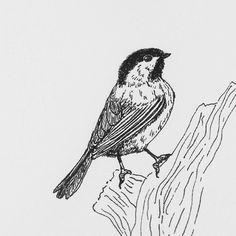 Inktober day 17  Black-capped chickadee  http://ift.tt/2ec9ese  #inktober #inktober2016 #drawing #dessin #bird