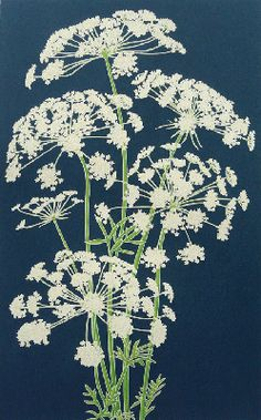 I think this is Queen Ann's Lace. that's a perfect name for this delicate flower. (tbb)