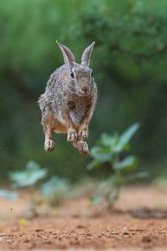 Bouncing Bunny by Kurt Bowman on 500px