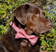I Heart You Bow Tie Dog Collar