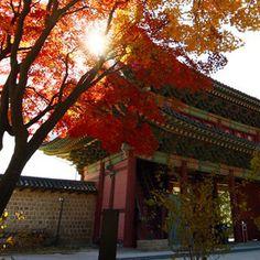 2014 미스 월드 코리아 왕관 컨셉 - 한국의 美, 창덕궁, 당초 문양 #korea #tiara #veluce