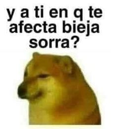 Funny Spanish Memes, Stupid Funny Memes, Funny Quotes, Current Mood Meme, Animal Jokes, Funny Animal, Mood Pics, Cartoon Memes, Wholesome Memes