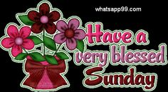 Very blessed Sunday lovely flowers