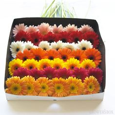 GrowersBox.com: Flowers: Gerbera Daisies Custom Box 168 Stems: Wholesale Flowers  Gerbera Daisies are large, colorful, fun and festive fresh cut flowers which are available year-round from flower farms in California.  Check out our selection of Beautiful Gerbera Daisies online at www.growersbox.com!