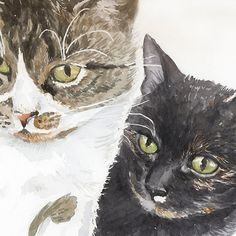 Two cats - tabby and tortie