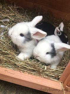 Rabbit Life, Pet Rabbit, Cute Baby Bunnies, Cute Babies, Bunny Bunny, Animals And Pets, Funny Animals, Daily Bunny, Dwarf Bunnies
